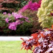 Fall-is-for-planting-2014[1]