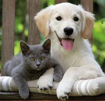 dog_cat1.jpg