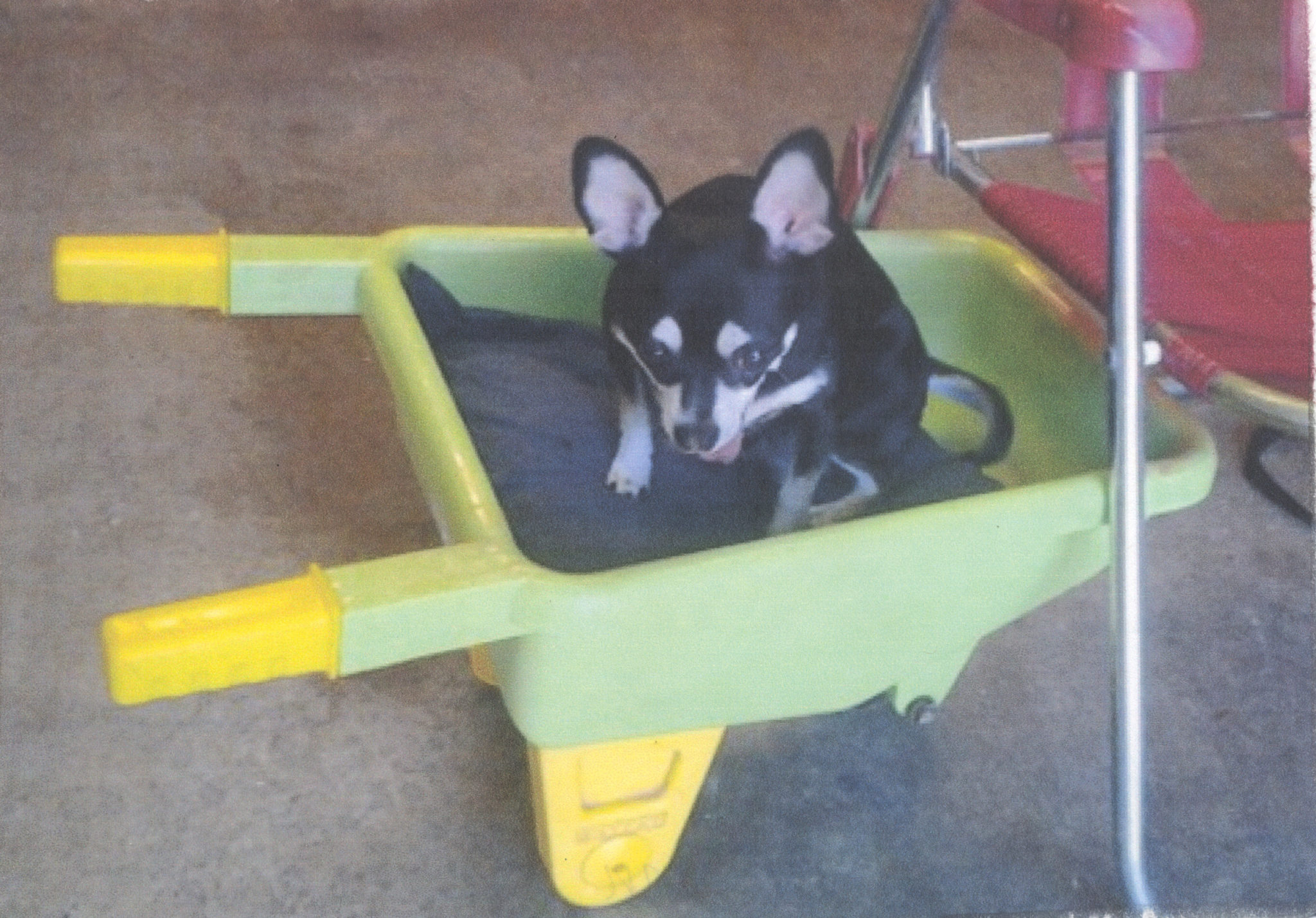 EAST COBBER PET OF THE WEEK