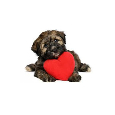 april-is-heartworm-awareness-month.jpg