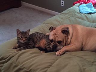 pets-of-the-week-boomer-caesar.jpg