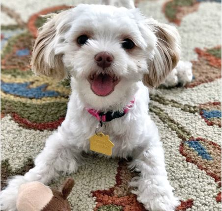 Pet of the Month: Shae