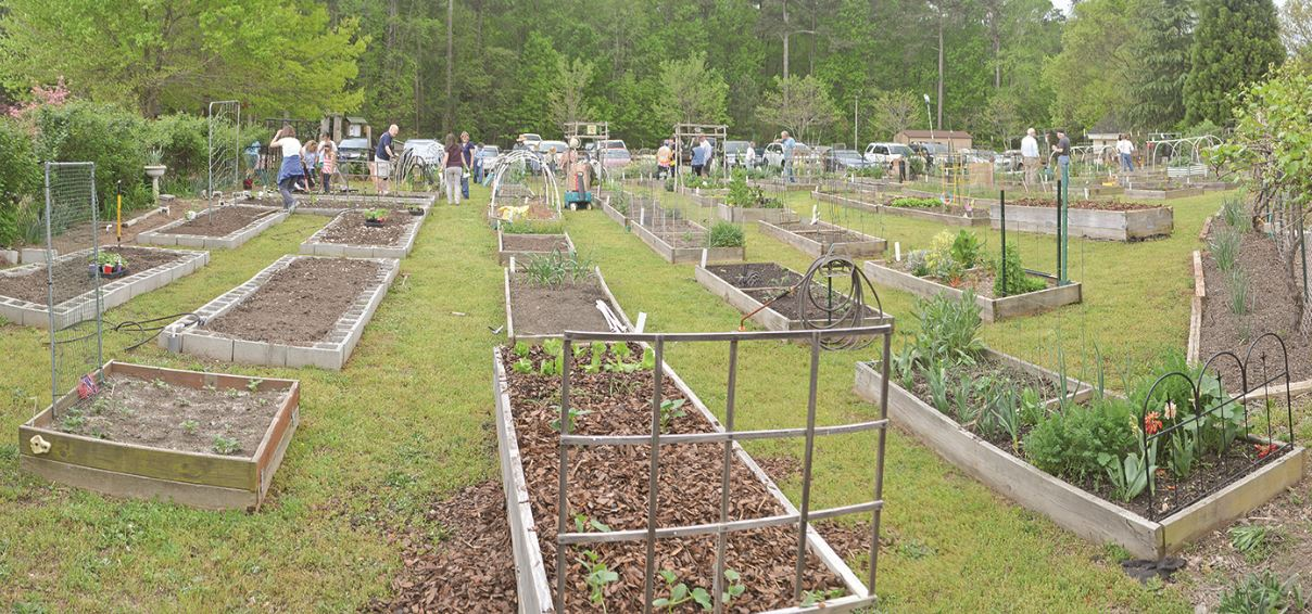 CROSSROADS GARDEN CELEBRATES A DECADE OF COMMUNITY GARDENING 1
