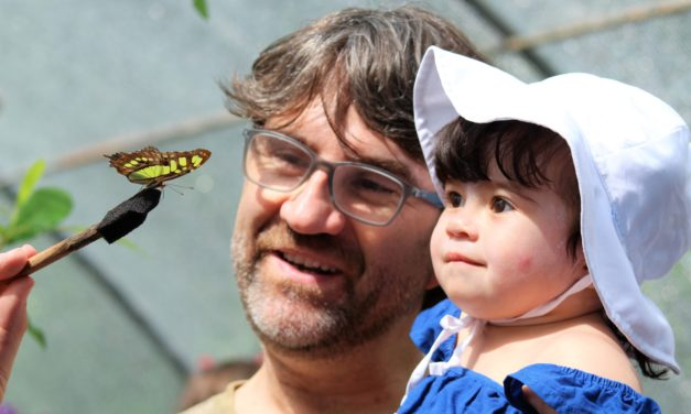 The 20th Annual Flying Colors Butterfly Festival Set for This Weekend