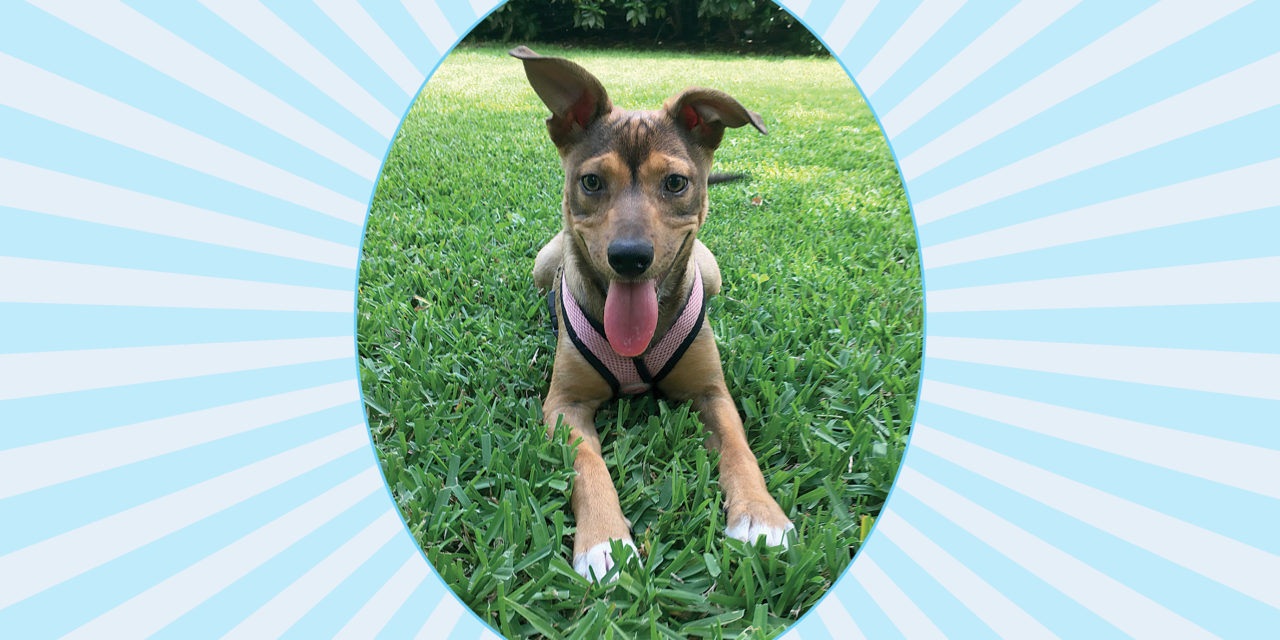 PET OF THE MONTH: JOSIE