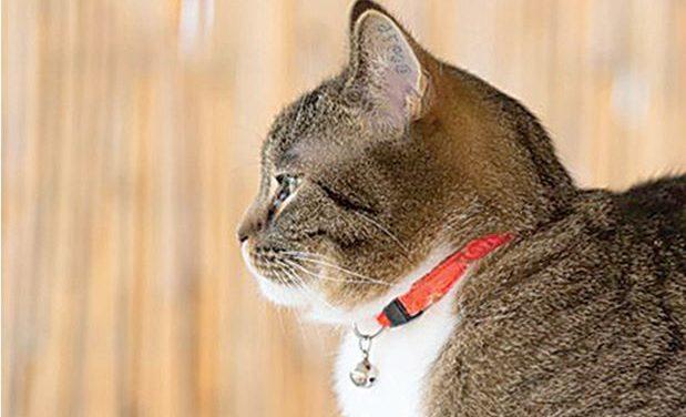 ORANGE COLLARS SAVE INDOOR CATS