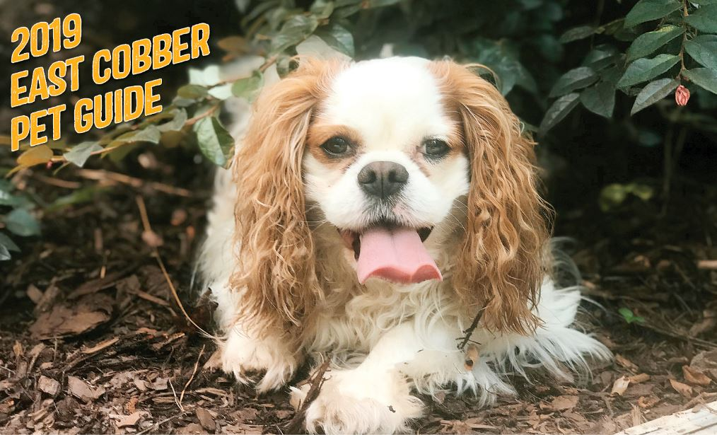 THE 14TH ANNUAL EAST COBBER PET GUIDE IS HERE!