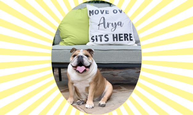 Pet of the Month: Arya