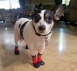 Pet of the Month: Kuku