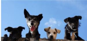 EAST COBBER FRUGAL FUNMOM FIELD TRIPS THIS WEEK: JULY 31 – AUGUST 6 4