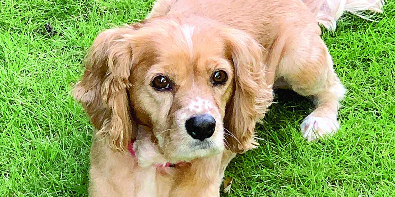 Pet of the Month: TOBY