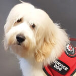 PAWS FOR LIFE USA SEEKS VOLUNTEERS TO FOSTER SERVICE DOGS