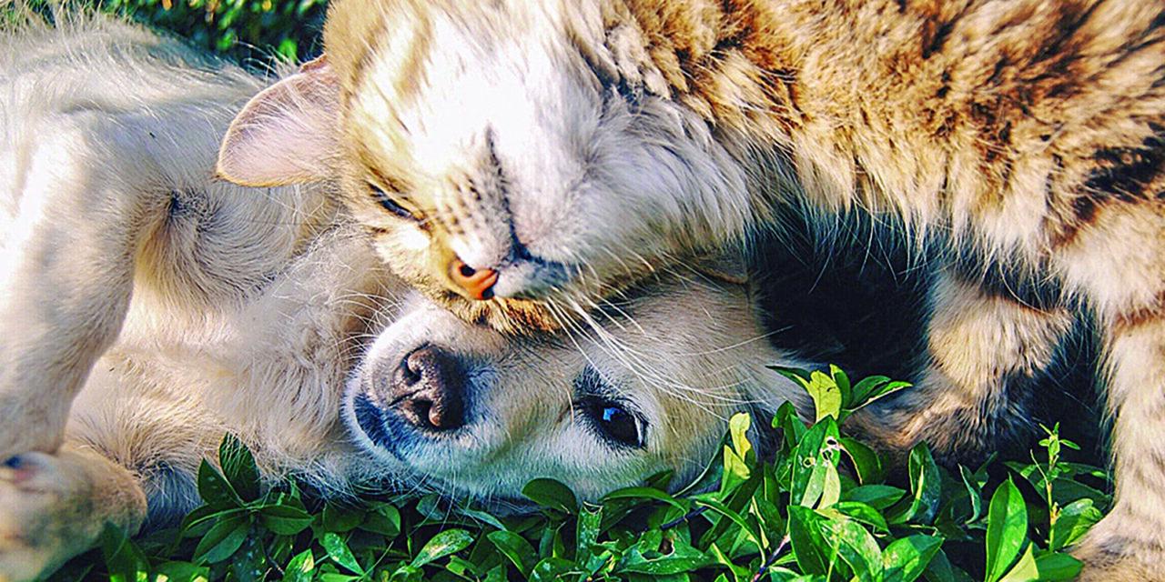 COBB ANIMAL SERVICES OFFERING PET ADOPTIONS
