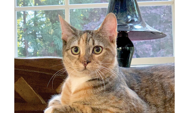PET OF THE MONTH: CALI THE CALICO